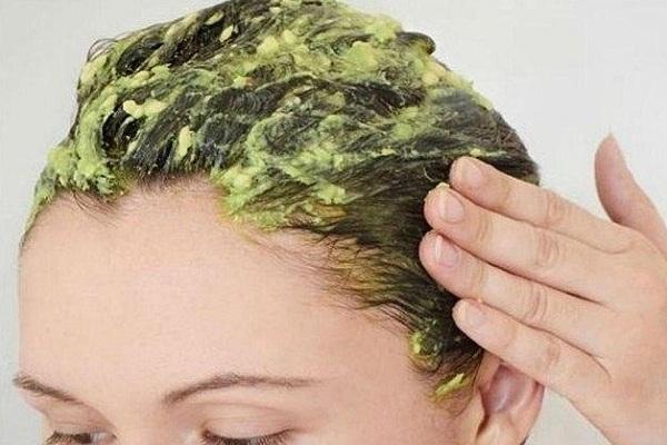 cara mengatasi rambut rontok dengan buah alpukat